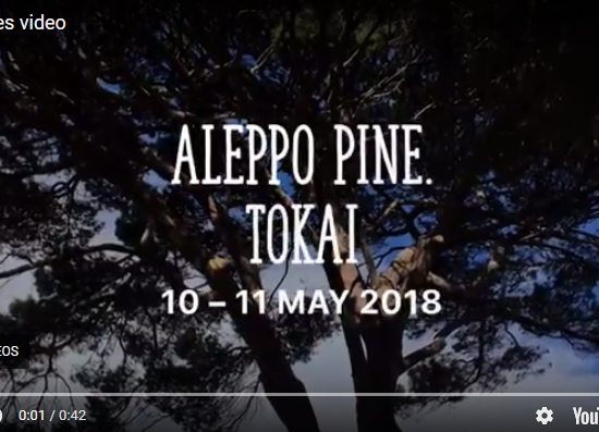 video of Aleppo Pine Tokai 10-11 May 2018